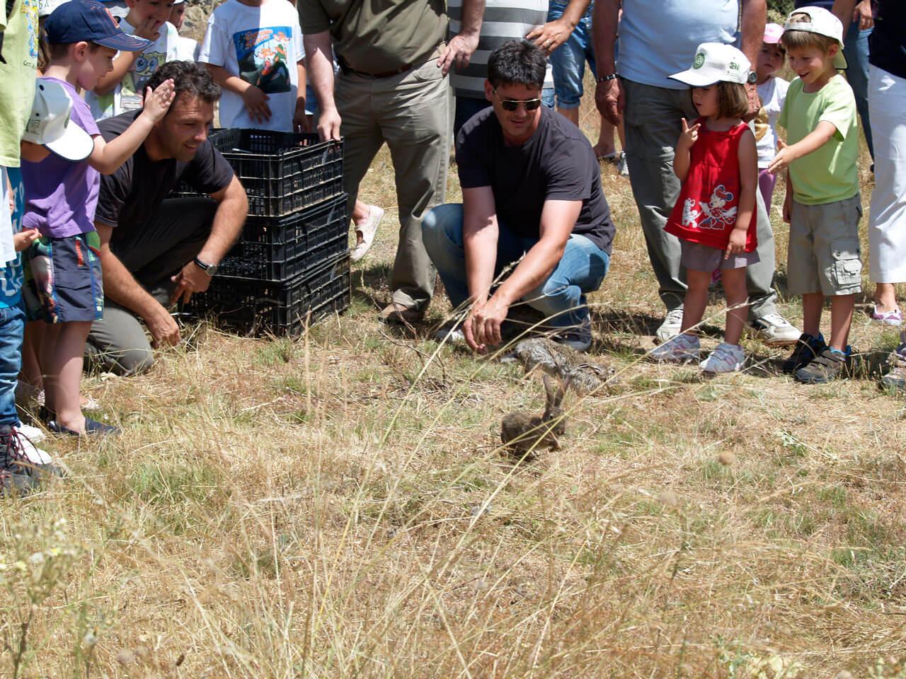Escuela - Fotos Conejos y perdices