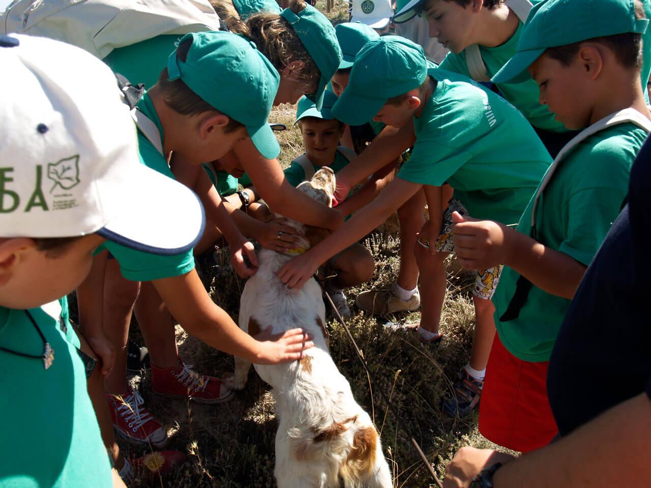 Escuela - Fotos Exhibición Perros