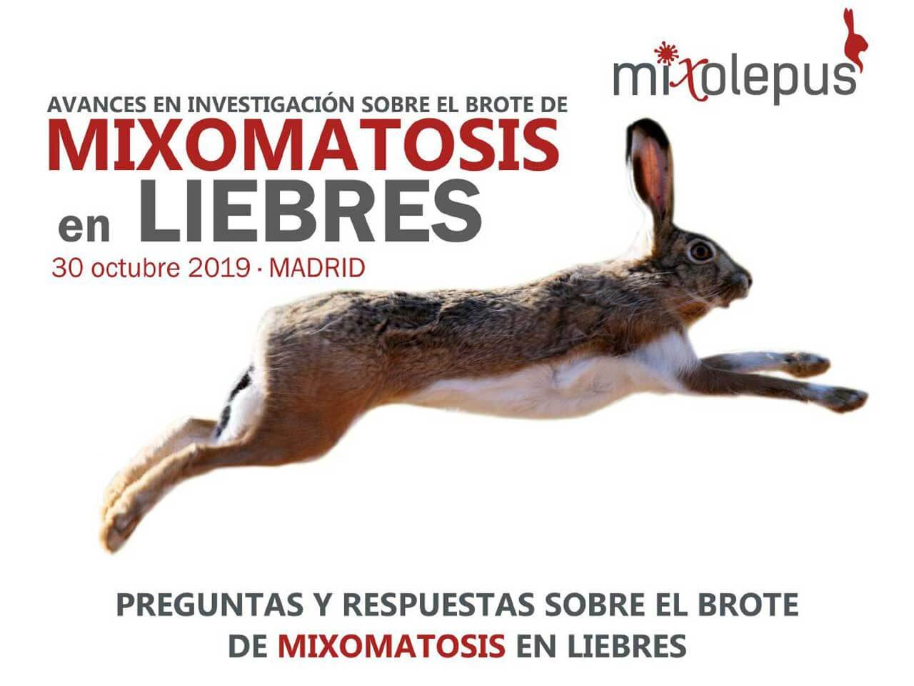 Avances en investigación sobre el brote de Mixomatosis en liebres