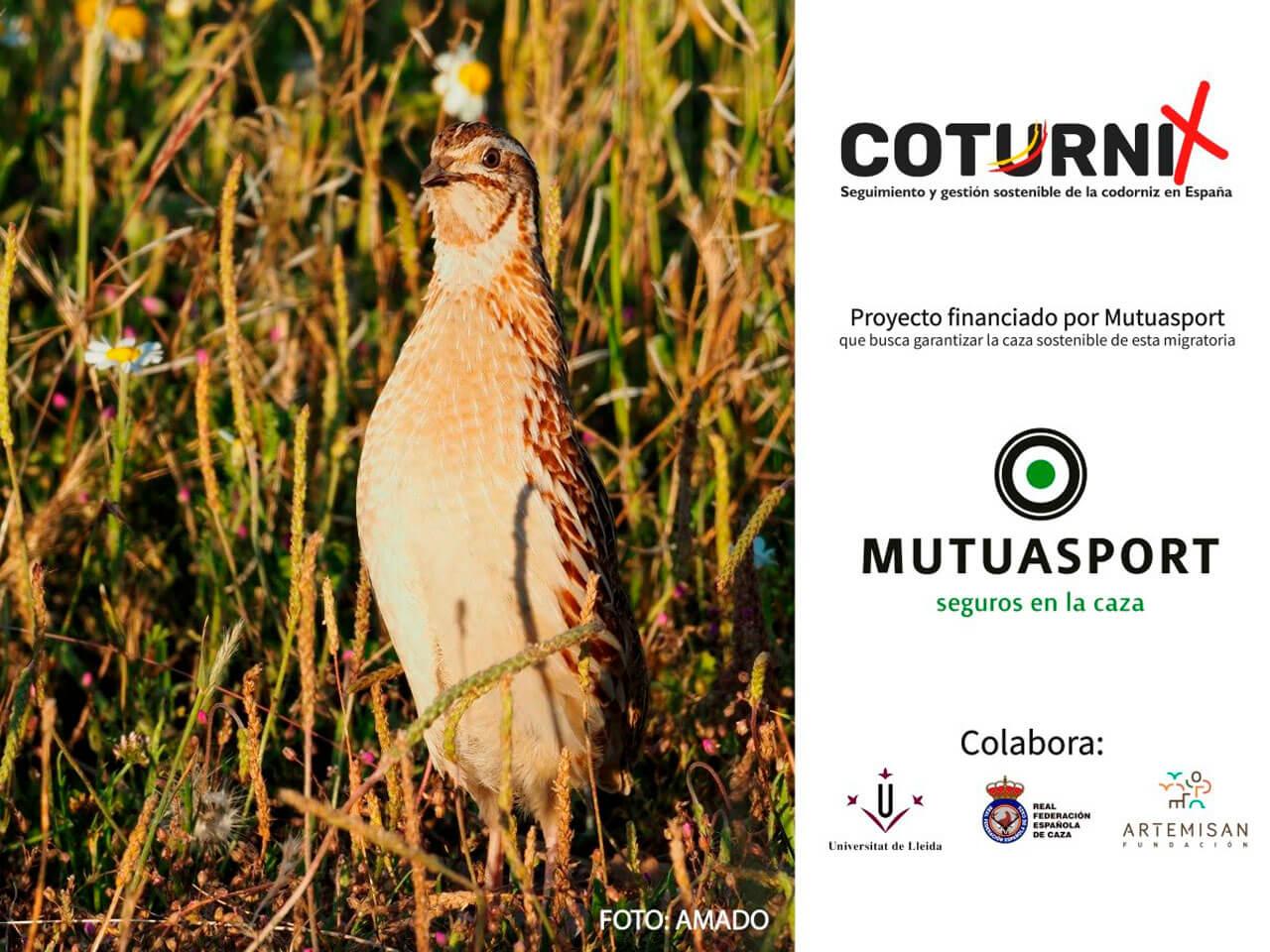 El proyecto Coturnix recoge más de 10.000 muestras de codorniz
