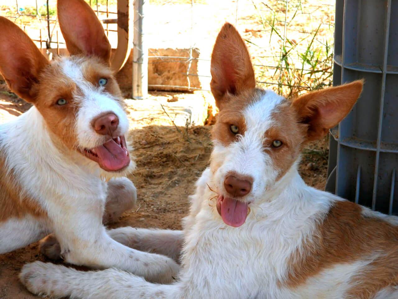 La RFEC presenta alegaciones al proyecto del nuevo Sistema Estatal de Registros de Protección Animal
