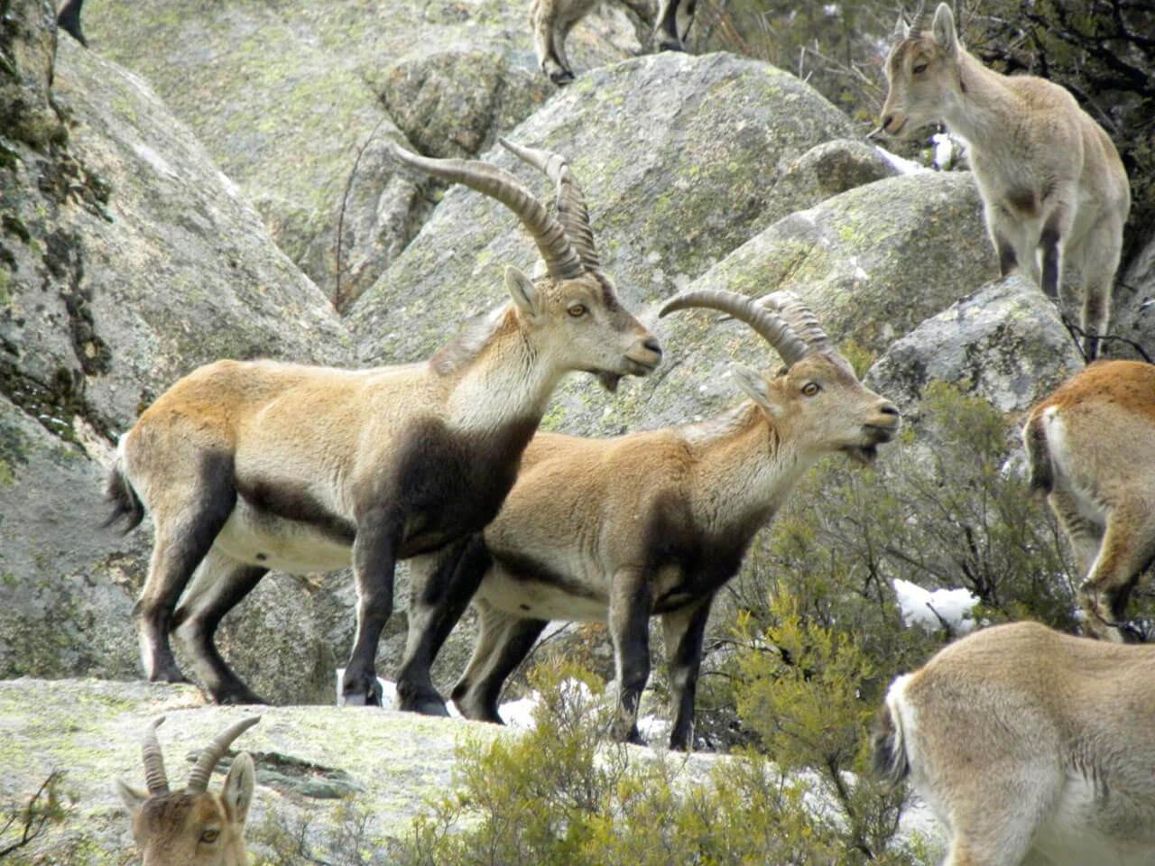Caza en reserva Sonsaz y zonas de caza controlada